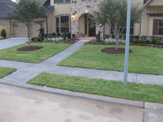 Palmetto St Augustine Forms A Thick Lawn With Slightly Smaller Leaf Blades 8 9mm Than Raleigh Dark Emerald Green Color