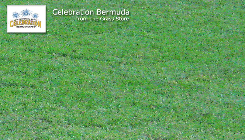 Zoysia Vs Bermuda Grass Bindu Bhatia Astrology